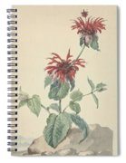 Red Bergamot In A Landscape, Aert Schouman Surroundings Of, C. 1750 - C. 1775 Spiral Notebook