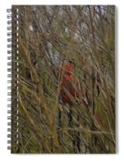 Red Bird Spiral Notebook