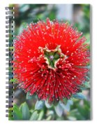 Red Bottlebrush Spiral Notebook