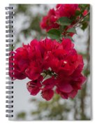 red bougainvillea in Laguna Guerrero Spiral Notebook