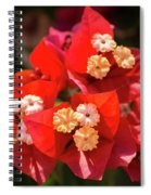 Red Bougainvillea  Spiral Notebook