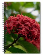 Red Bouquet 9 Spiral Notebook