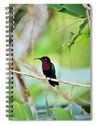 Red Breasted Humming Bird  Spiral Notebook