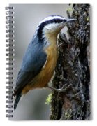 Red Breasted Nuthatch Spiral Notebook