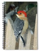 Red Breasted Woodpecker On Fence Spiral Notebook