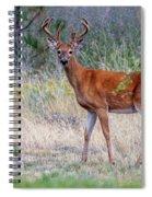 Red Bucks 1 Spiral Notebook