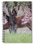 Red Bucks 5 Spiral Notebook
