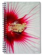 Red Burst Spiral Notebook