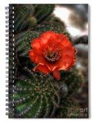 Red Cactus Flower  Spiral Notebook