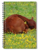 Red Calf In The Buttercup Meadow Spiral Notebook