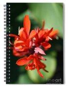 Red Canna Flower Spiral Notebook