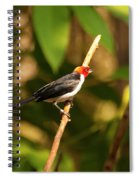 Red Capped Cardinal Spiral Notebook