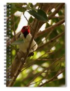 Red-capped Cardinal Digital Oil Spiral Notebook