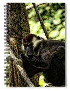 Red-capped Mangabey Spiral Notebook
