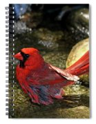Red Cardinal Bathing Spiral Notebook