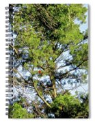 Red Cardinal In Tree Spiral Notebook