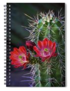 Red Claret Cup Cactus  Spiral Notebook