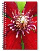 Red Clematis Spiral Notebook