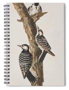 Red-cockaded Woodpecker Spiral Notebook