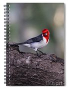 Red Crested Posing Spiral Notebook