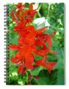 Red Crocosmia Lucifer Spiral Notebook