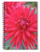 Red Dahlia Delight Spiral Notebook