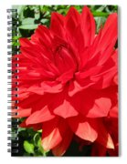 Red Dahlia In The Green Spiral Notebook