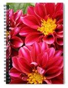 Red Dahlias Spiral Notebook