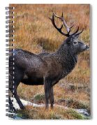 Red Deer Stag In Autumn Spiral Notebook