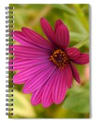 Red Delight Spiral Notebook