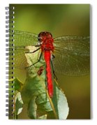 Red Dragon Fly Spiral Notebook