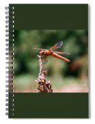 Red Dragonfly II Spiral Notebook