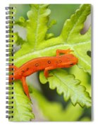 Red Eft Eastern Newt Spiral Notebook