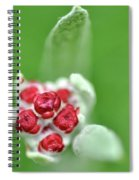 Red Everlasting At Amatzia Forest -1 Spiral Notebook