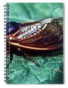 Red Eyed Cicada Spiral Notebook