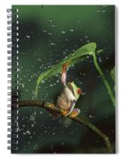 Red-eyed Tree Frog In The Rain Spiral Notebook