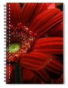 Red Floral Spiral Notebook