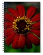 Red Flower 8 Spiral Notebook