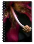 Red Flower Close Up Spiral Notebook