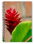 Red Flower IIi Spiral Notebook