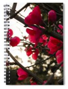 Red Flowers At Sunset Spiral Notebook
