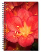 Multiple Red Flowers In Bloom Spiral Notebook