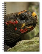 Red-footed Tortoise Spiral Notebook