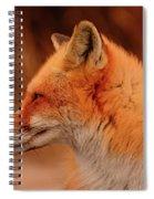 Red Fox 2 Spiral Notebook