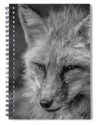 Red Fox In Black And White Spiral Notebook