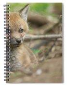 Red Fox Kit Spiral Notebook