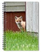 Red Fox Kit Peaking Around Old Barn Spiral Notebook