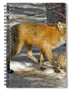 Red Fox Mommy And The Cutest Puppy Spiral Notebook
