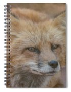 Red Fox Portrait Spiral Notebook