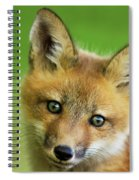Red Fox Pup Spiral Notebook
